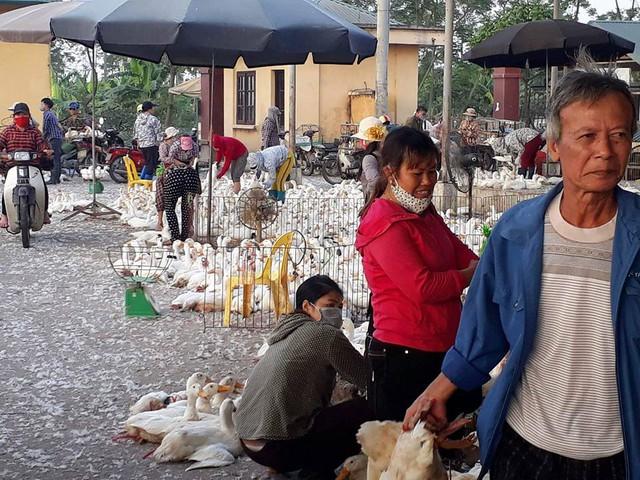 Tình trạng buôn bán lộn xộn dẫn đến việc khách hàng không biết đâu là gà, vịt đã qua kiểm dịch.