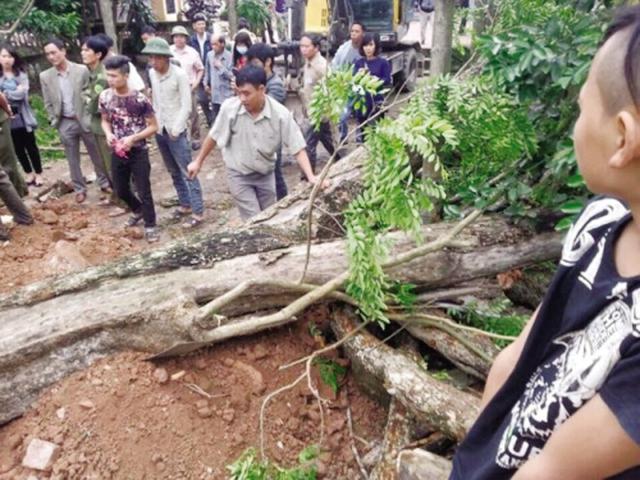 Đại gia trúng đấu gỗ sưa ở Bắc Ninh bất ngờ kêu… lỗ