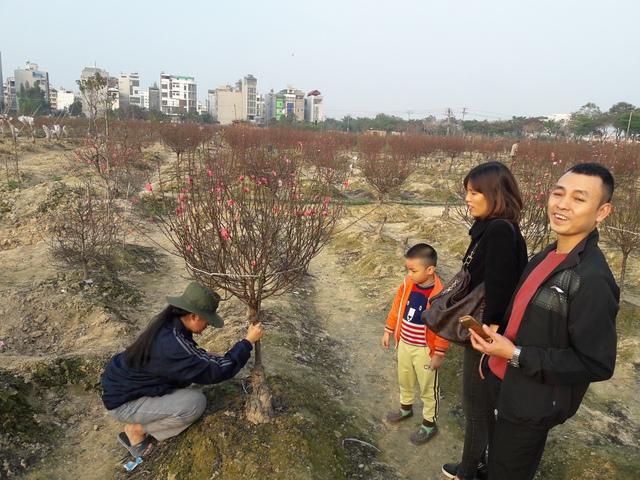 Đảo cả vườn đào, vợ chồng trẻ này quyết lấy một cành vì đã quá... mỏi chân.