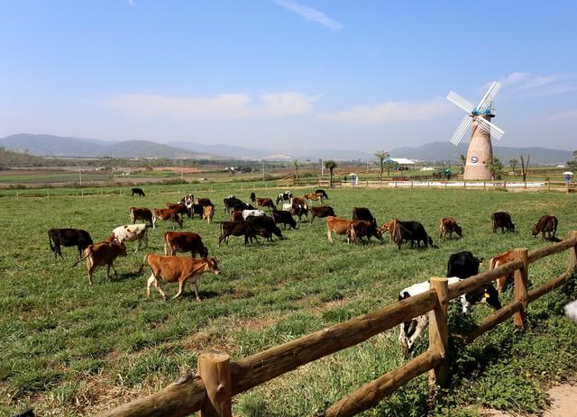 Trang trại Organic tại Lâm Đồng – Đà Lạt – trang trại Organic đầu tiên đạt tiêu chuẩn châu Âu tại Việt Nam.