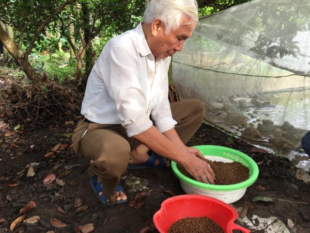 Ông Tại đang chuẩn bị thức ăn cho đàn ếch. Ảnh: T.G