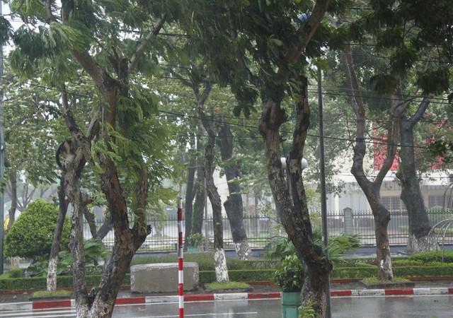 Mưa lớn, gió rít liên hồi tại Nghệ An.