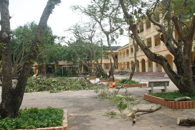 Nhiều mái nhà của trường tốc mái, các phòng học hầu hết bị vỡ cửa kính. Cây xanh trong khuôn viên trường bị bão quật đổ la liệt.