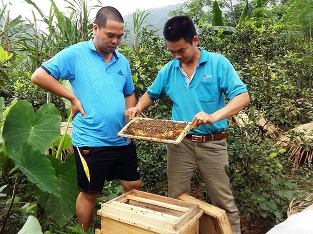 Nguyễn Văn Nam (bìa phải) hướng dẫn kỹ thuật cho hộ thanh niên mới vào nghề nuôi ong