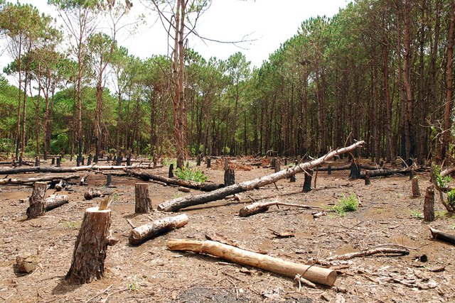Nhiều đại biểu Quốc hội trăn trở về biện pháp hữu hiệu nhằm bảo vệ rừng. Ảnh minh hoạ