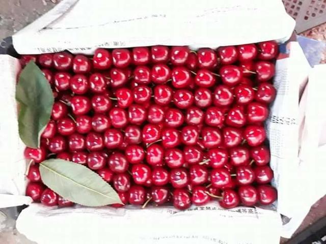 Cherry Trung Quốc được rao bán buôn trên mạng khá nhiều