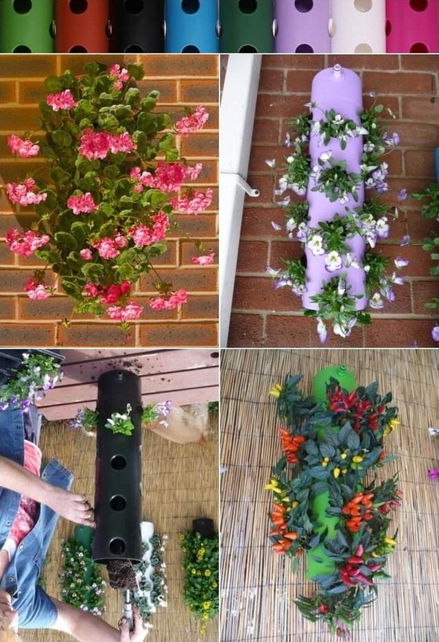 1. Kiếm một ống nhựa PVC, khoan những lỗ tròn và bạn có thể trồng ớt, dâu tây và hoa trong những ống nhựa này.