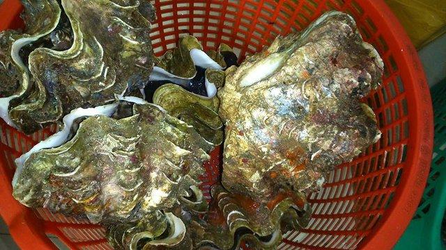 Ốc tai tượng khổng lồ được khá nhiều người dân Hà thành săn mua về ăn