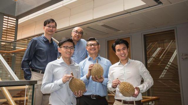 Các nhà khoa học đã tìm ra bộ gene của sầu riêng chính là nguyên nhân gây mùi của loại quả này.