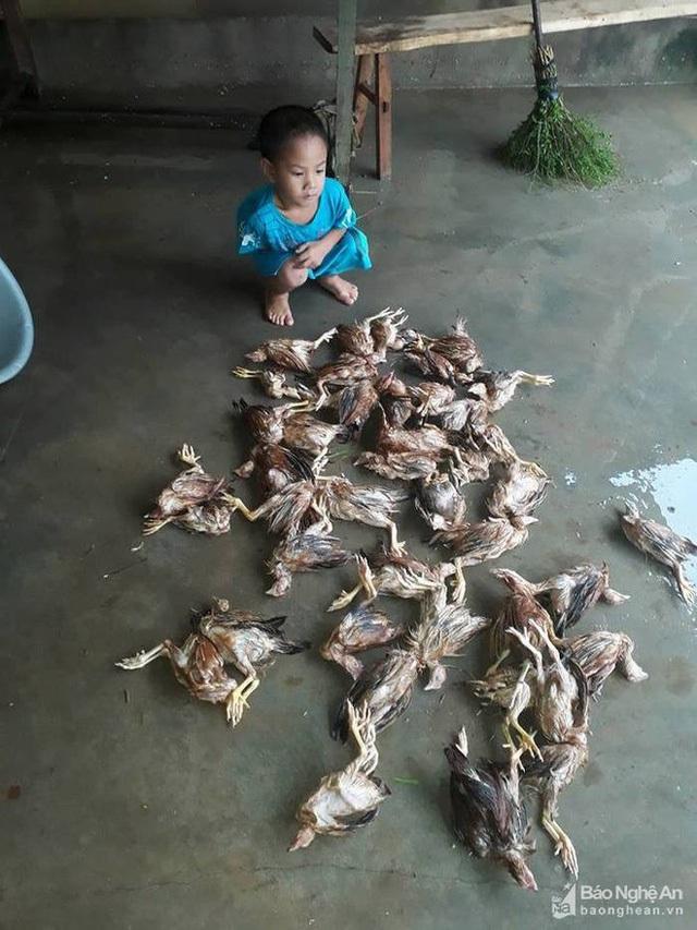 Em bé ở xã Thanh Mai, huyện Thanh Chương, Nghệ An ngồi bên đàn gà chết vì nước lũ. Ảnh: Báo Nghệ An
