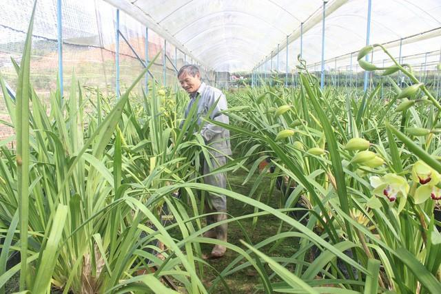 Lão nông lãi hơn nửa tỷ mỗi năm từ trồng địa lan