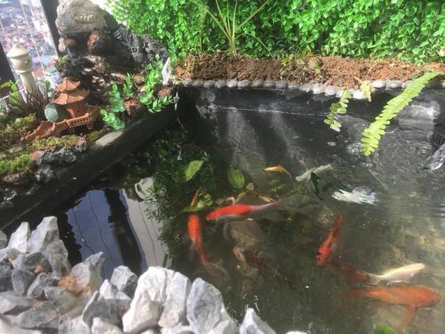 Bể cá long lanh chỉ bằng một cái thùng xốp.