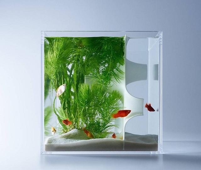 Với một số loài rêu xanh trang trí trong lòng bể khiến nó trở nên sinh động hơn.