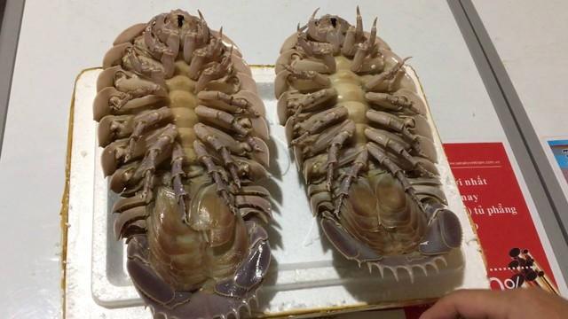 Nhìn những con bọ biển khá giống với bọ trên cạn