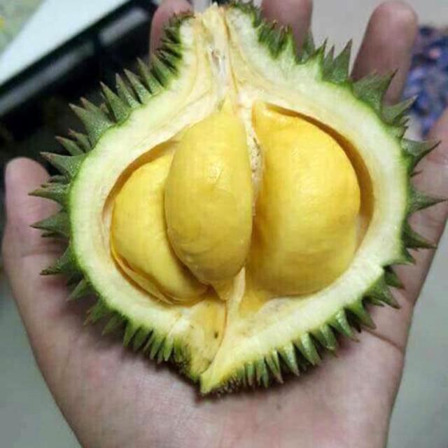 Nhiều thương lái kinh doanh trái cây cho biết lần đầu tiên thấy loại sầu riêng trọng lượng mỗi trái chưa tới nửa kg nhưng múi rất nhiều này. Ảnh: Ngọc Trinh.