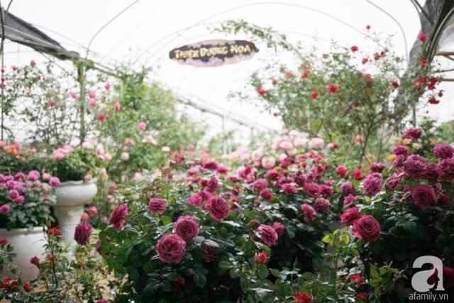 Vườn hồng nằm trong khuôn viên 31ha của Viện Rau - Hoa - Quả TW.