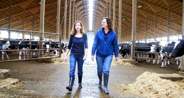 Bên trong trang nông trại bò sữa của Abbott