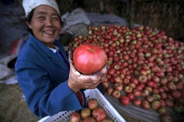 Sau Trung Quốc, Mỹ là quốc gia đứng thứ hai về sản lượng cà chua.