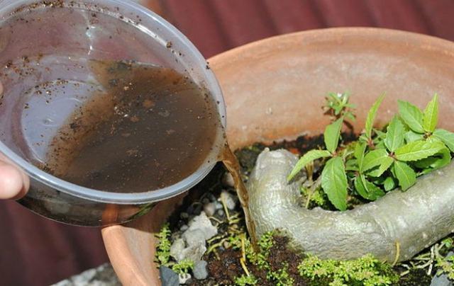 Nitro trong trà là một loại phân bón rất tốt cho lá cây.