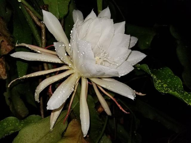Hình ảnh bông hoa mà Tom Randall chia sẻ trên Twitter - Ảnh: Tom Randall.