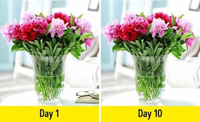 Trộn 2 muỗng canh giấm, 3 muỗng canh đường với một lít nước ấm và dùng để cắm hoa. Thủ thuật này giữ cho bình hoa của bạn tươi thêm được vài ngày nữa.