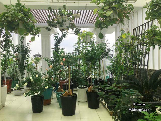 Khu vườn trên sân thượng nhà chị Uyên rộng 120m2.