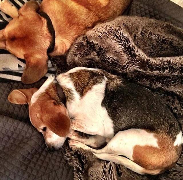 Hai chú chó đáng yêu thường xuyên xuất hiện trên trang Instagam của Meghan.