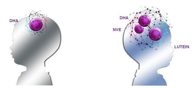 Vitamin E tự nhiên tăng kết nối não bộ giúp trẻ học hỏi tốt hơn
