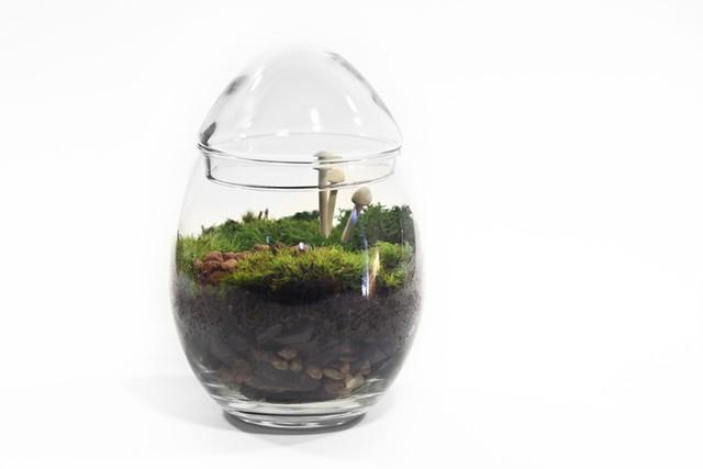 Dưới bàn tay khéo của nghệ nhân, tiểu cảnh Terrarium được biến hóa thành hàng loạt bonsai hình quả trứng độc đáo. Ảnh: Printest.