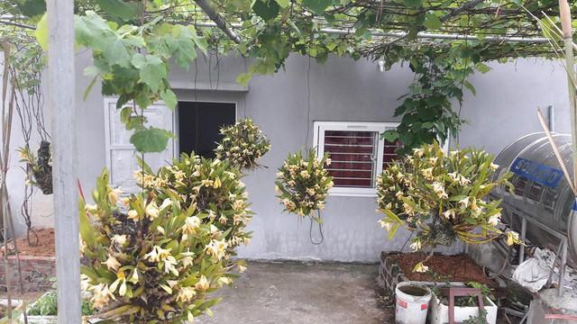 Không chỉ trồng nho, cũng trên sân thượng 35m2 ấy, anh Khoa còn trồng cả phong lan