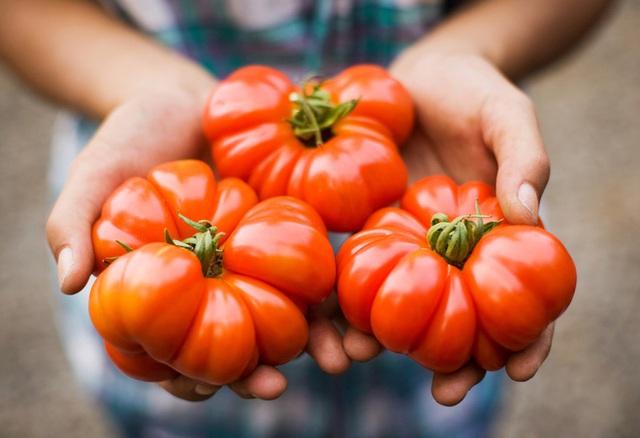 Hiện tại đạo luật này không còn tồn tại nữa nhưng có lẽ người ta đã quá quen với việc coi cà chua là một giống rau.