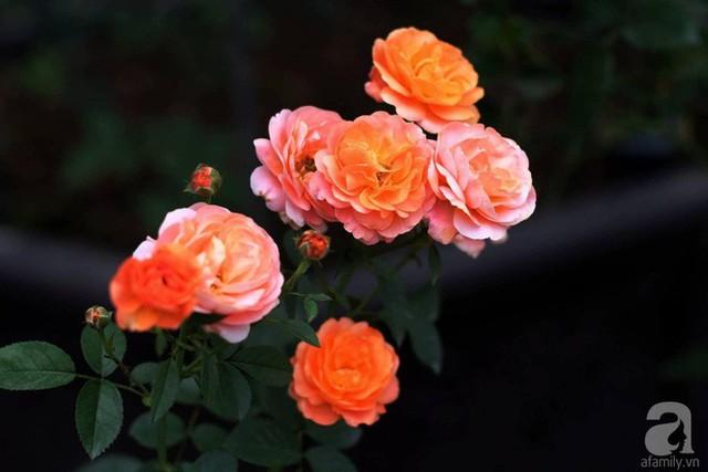 Hoa nở đẹp duyên dáng trong vườn.