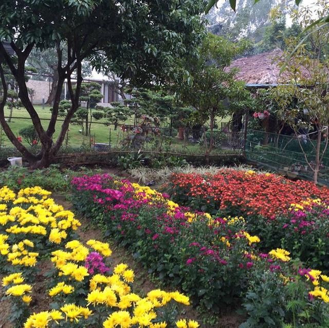 Những luống hoa khoe màu sắc rực rỡ.