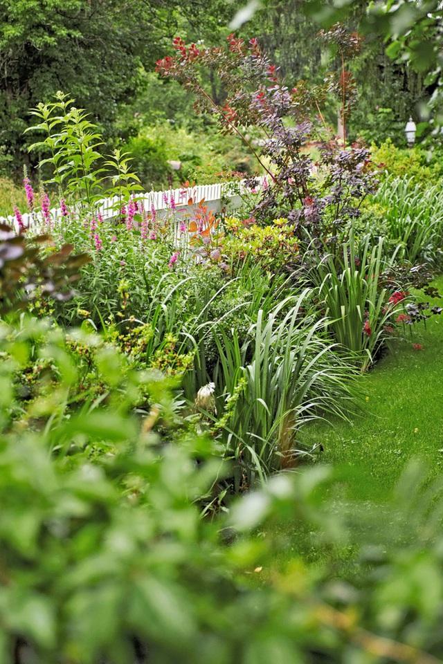 13. Dọc theo hàng rào bao quanh khu vườn, bạn cũng có thể trồng các loại cây thập cẩm tạo vẻ đẹp đa dạng, tươi tắn cho không gian ngoại thất.