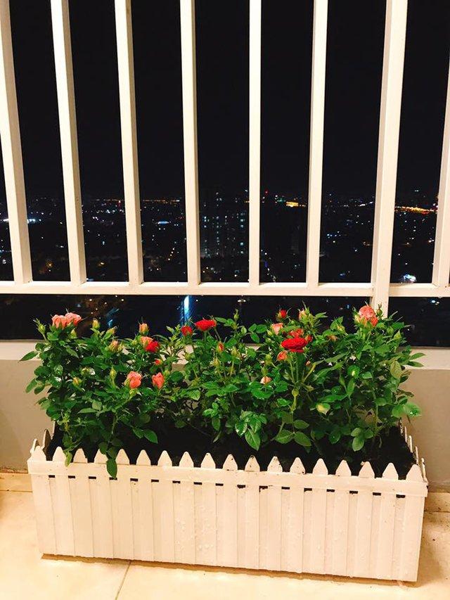 Chậu hoa hồng hình chữ nhật xinh xắn ra khá nhiều hoa.