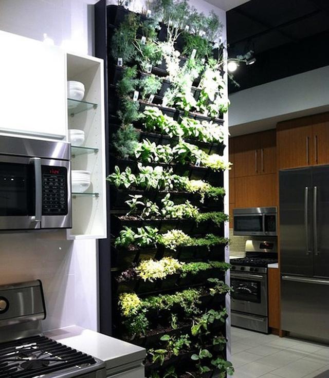 Vườn rau thơm xanh ngát ngay trong phòng bếp – ý tưởng khiến các bà nội trợ thích mê.