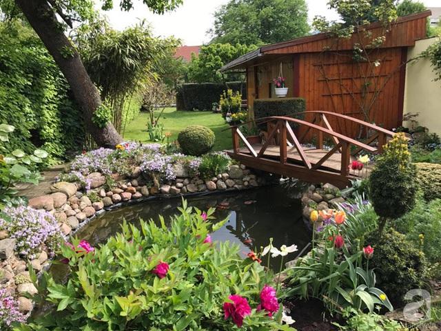 Khu vườn thêm duyên dáng nhờ sắc màu mẫu đơn.
