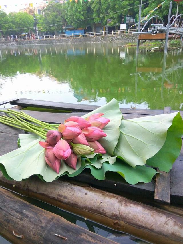 Chị Ngô Phượng lên đầm chọn mua những bông sen tươi đẹp nhất