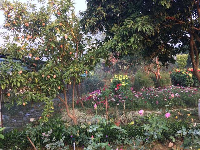 Không chỉ có hoa, vườn nhà Mỹ Linh còn có rất nhiều cây ăn quả.
