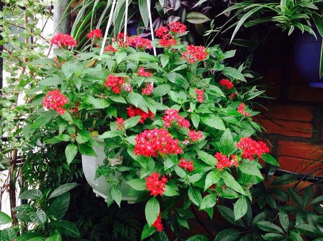 Hoa trên sân thượng bung nở