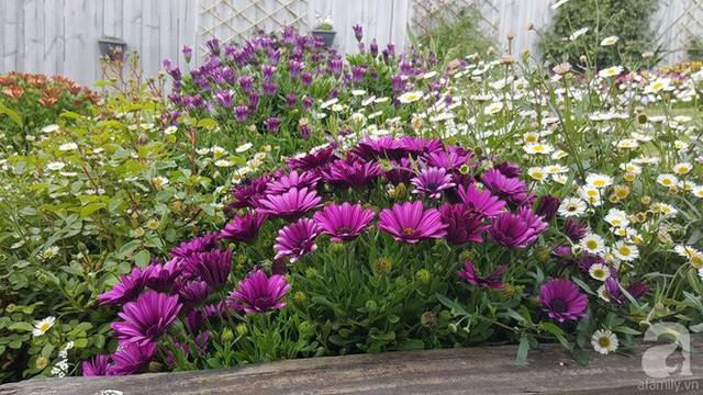 Trong vườn chị trồng khoảng 40 loài hoa.