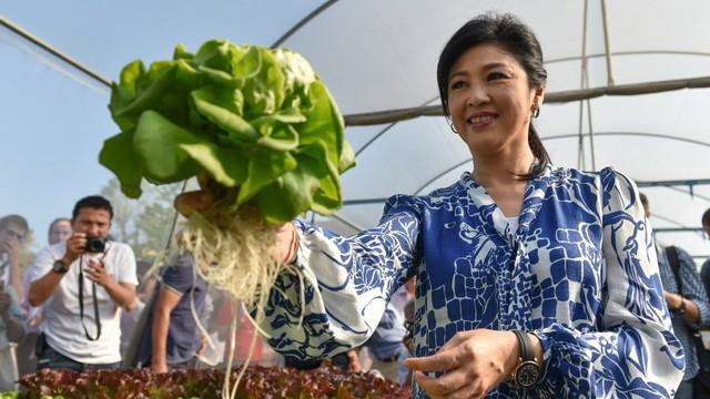 Từ loại rau xà lách cho đến rau cải... đều được bà chăm chút khá chỉnh chu, cẩn thận. Bởi vậy, các luống rau cứ thế đua nhau mọc tươi tốt và hầu như không bị sâu ăn hại.