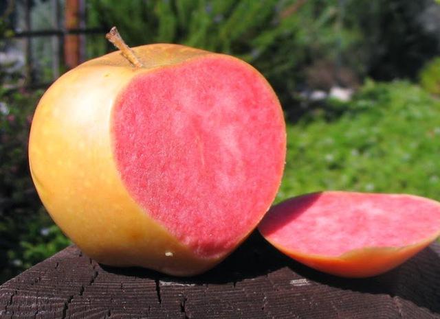 Chúng được tìm thấy lần đầu tiên vào năm 1960. Sau đó, được nhân rộng, trồng nhiều hơn và được bán ra thị trường vào những năm 1980.