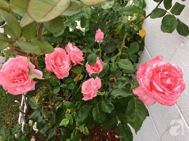 Chị Chi quy hoạch vườn vô cùng ấn tượng bằng cách sơn tường màu trắng, giúp cây và hoa thêm nổi bật.