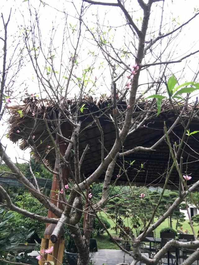 Ở vườn còn có một nhà chòi lợp bằng lá cọ để có thể ngồi nói chuyện, thưởng thức đồ uống và tận hưởng không khí trong lành.