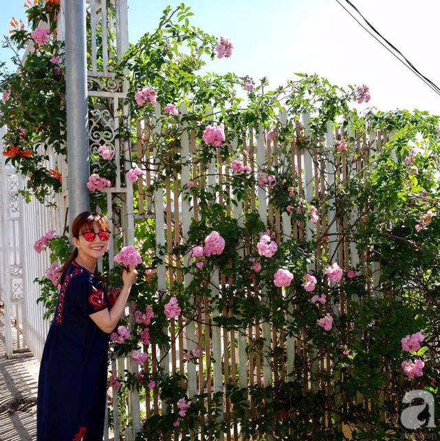 Hàng rào hoa hồng đẹp ngẩn ngơ.