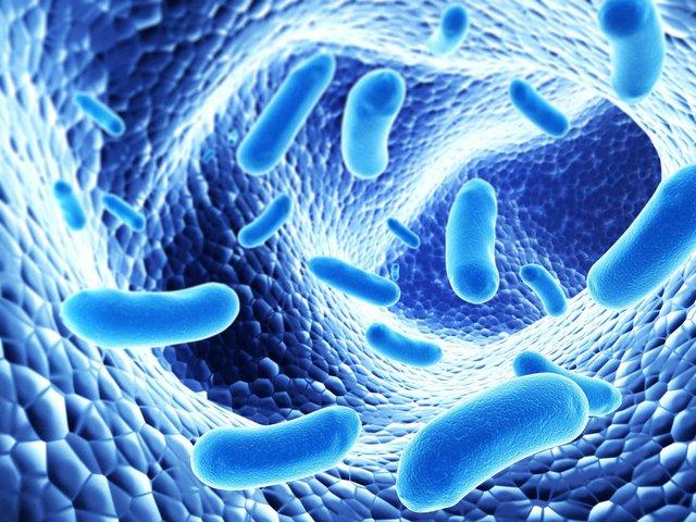 Bổ sung đầy đủ lợi khuẩn Bifido giúp người đau dạ dày giảm nguy cơ mắc viêm đại tràng