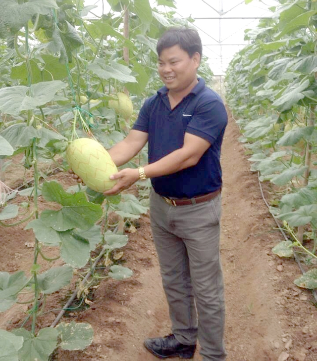 Anh Đỗ Văn Hùng, xã Hồng Tiến (Khoái Châu) thu nhập cao từ trồng dưa lưới, dưa kim cô nương trong nhà kính.