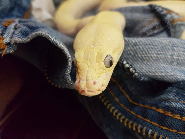 Quỳnh Anh chia sẻ: Đây chính là pet (thú cưng) của cháu, con chị gái mình. Pet vừa trắng lại vừa mềm nên được cháu đặt tên là Bông.