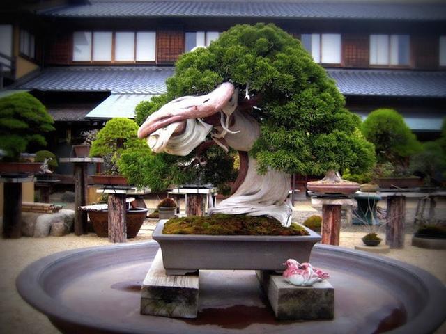 Ảnh: Bonsai Shunka-en